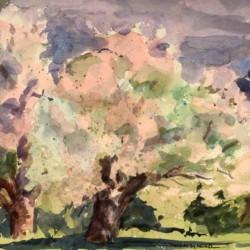 Tom McCobb Apple Trees