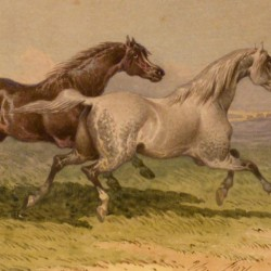 Theodore Gericault Fort A Fast Gallop