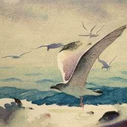 Sandor Bernath In Flight
