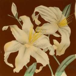 Robert Reinhardt Von Liski Lilies